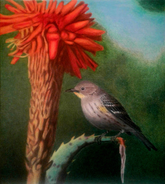 Yellow-rumped Warbler on succulent. Colored Pencil. Greg Gillson