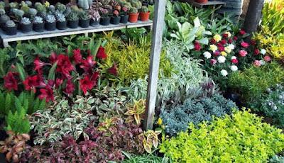 Toko-tanaman-hias-murah