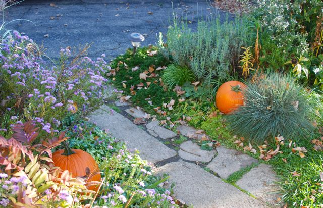 Asters and pumpkins add color to the sunny Driveway Garden this fall.