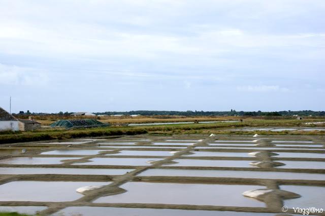 Alcune delle vasche per la raccolta del sale all'Isola di Noirmoutier