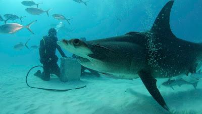 Cena de 'Bear Grylls Vs. Tubarões' - Divulgação