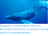 https://sciencythoughts.blogspot.com/2019/09/megaptera-novaeangliae-how-kermadec.html