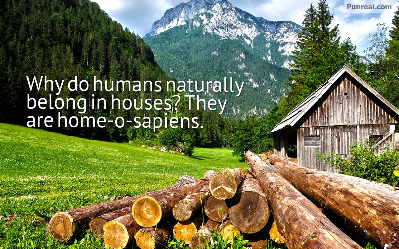 You can tell humans belong in houses because their name is home o sapiens