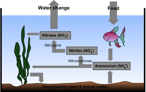 Saltwater nitrogen cycle