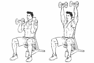 4. Seated Arnold Press