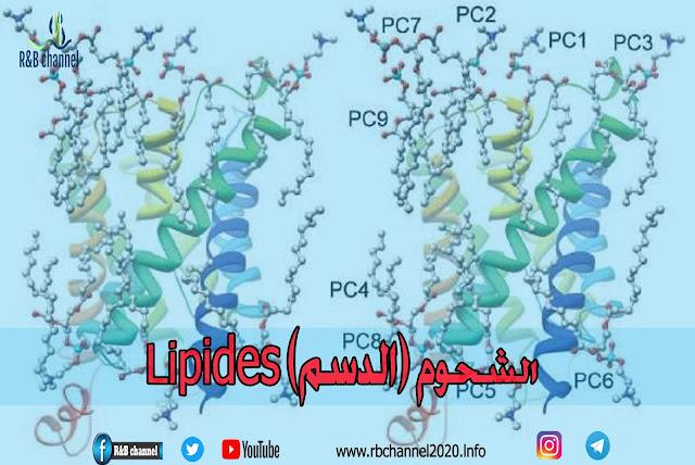 الشحوم (الدسم) Lipides | تصنيف الشحوم