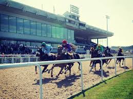 Free Horse Racing Tips for Wolverhampton Tomorrow