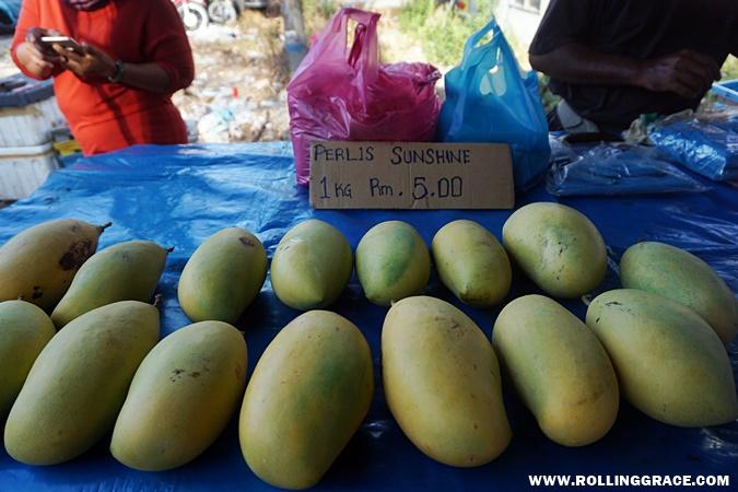 perlis sunshine gold manga mangoes