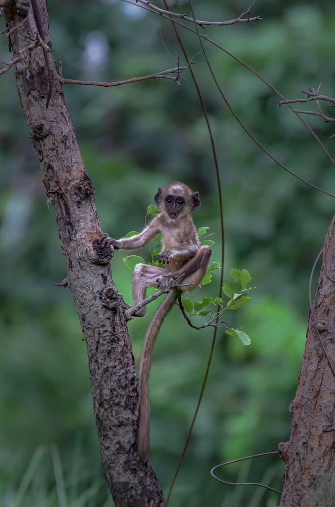 Monkey with Cuteness