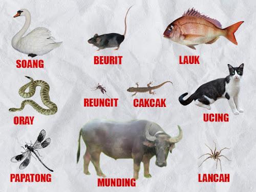 Nama-nama hewan dalam Bahasa Sunda