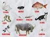 Belajar Mengenal Nama-Nama Binatang dalam Bahasa Sunda