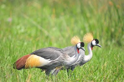Birding safari in Africa, Africa safari, safari Africa, Uganda safaris