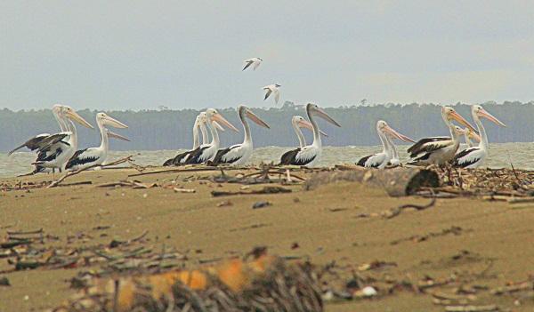 Menuju Pulau Tiga; Journalist Field Visit To lorenstz National Park (3)