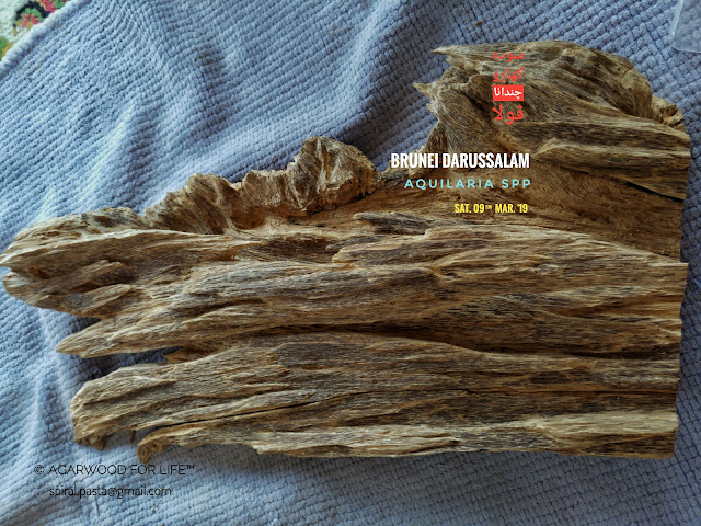Medium quality of display Agarwood piece from Brunei. Perfect for decorating our office and home.