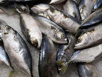 Manfaat Ikan Tuna yang Sayang Untuk Dilewatkan Begitu Saja!