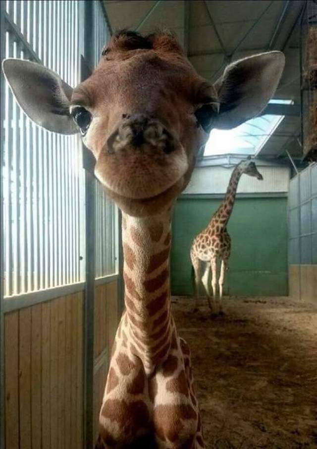 Funny animals of the week - 3 March 2017, funny animal images, cute animal pics