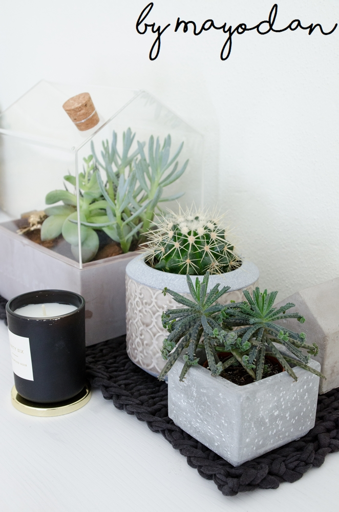 Zimmer mit pflanze eine lebenseinstellung und eine for Zimmerpflanzen in szene setzen