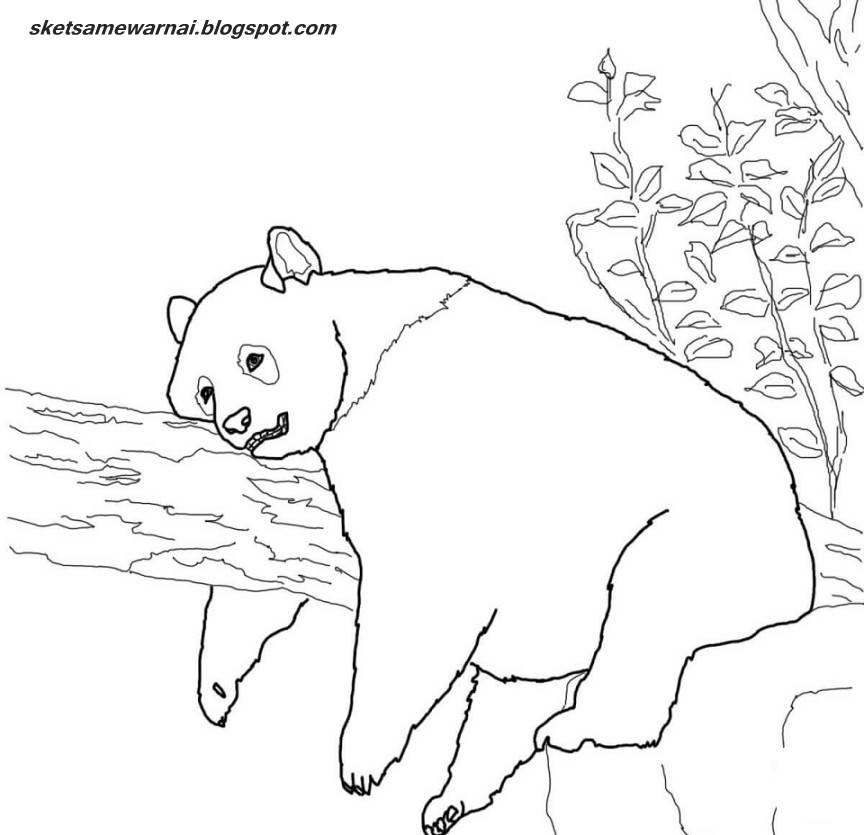 Sketsa Mewarnai Gambar Hewan Panda Download Boneka Beruang