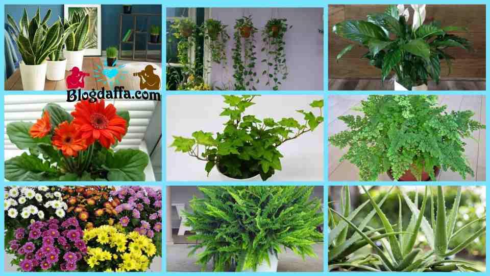 Jenis-jenis tanaman hias pembersih udara
