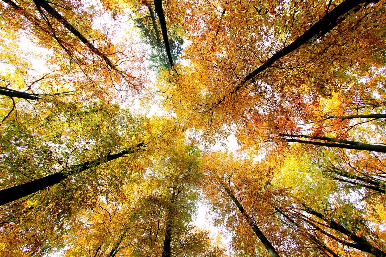 Chiều vàng những hàng cây