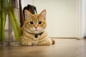 Mengatasi Bulu Ekor Kucing Botak Agar Cepat Tumbuh Kembali