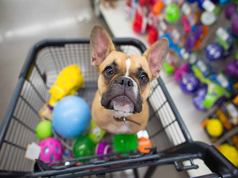 The 15 Essential New Puppy Shopping List: Things To Buy For A New Puppy