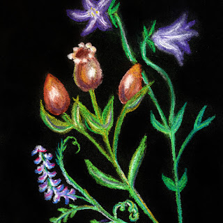 Wild flower and seedpods soft pastel drawing