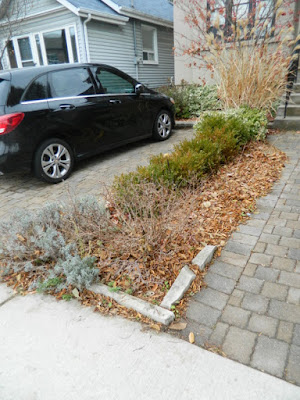 York Humewood Fall Cleanup Front Yard Before by Paul Jung Gardening Services--a Toronto Organic Gardening Company
