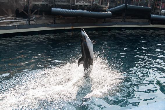 Espectaculo de delfines en acuario de Vancouver