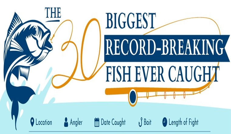 THE 30 BIGGEST RECORD-BREAKING FISH EVER CAUGHT #Infographic