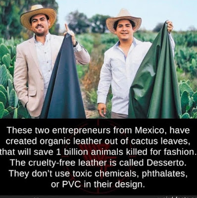 These two entrepreneurs from Mexico, have created organic leather out of cactus leaves, that will save 1 billion animals killed for fashion. The cruelty-free leather is called desserto. They don't use toxic chemicals, phthalates, or PVC in their design.