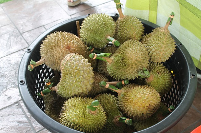 Pesta Durian Musang King