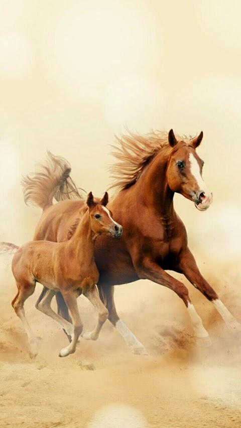 Mẹ Con Nhà Ngựa