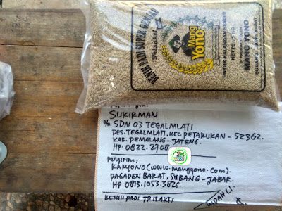 Benih padi yang dibeli SUKIRMAN Pemalang, Jateng. (Sebelum packing karung ).