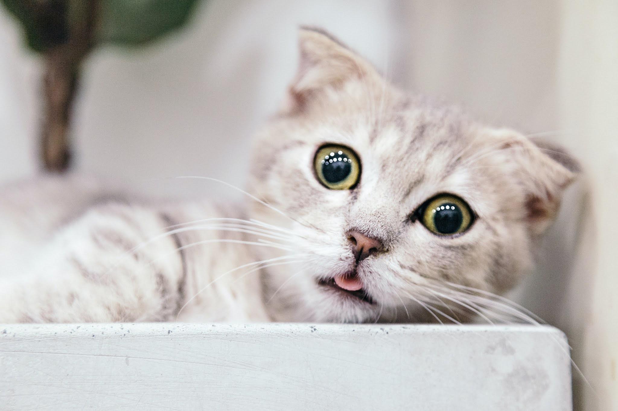 soins pour bebe chat