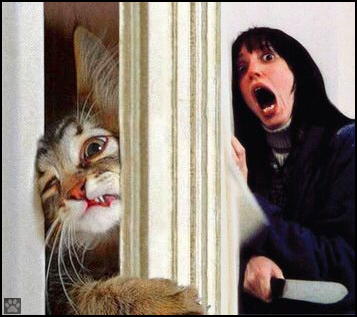 The Shining Kitty
