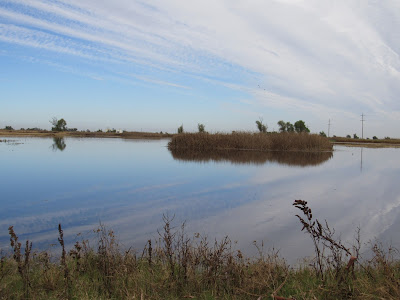 Sacramento National Wildlife Refuge