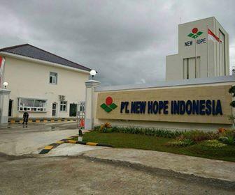 Lowongan Kerja Makassar Staff Purchasing PT. New Hope Indonesia