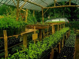 Hebat, Ini 10 Contoh Tanaman Hortikultura yang Harus Anda Tau!