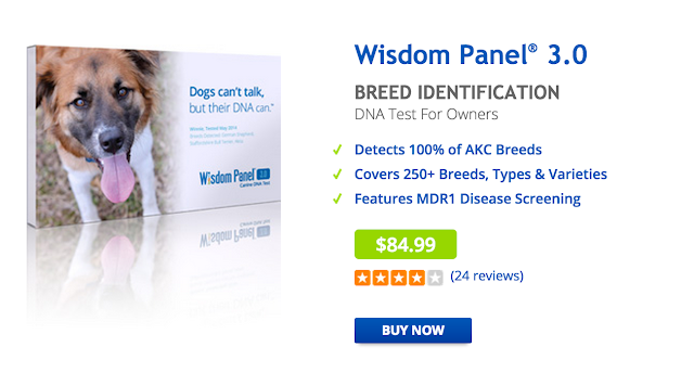Wisdom Panel 3 0: DNA Testing for Pups! | Habits of a Modern
