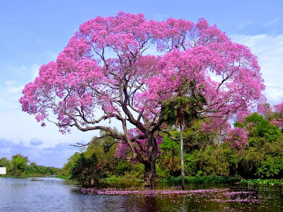 Image result for beautiful trees in the world