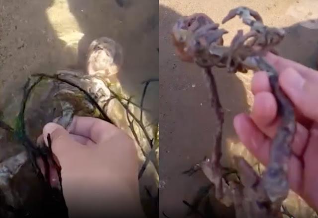 """Парень нашёл на пляже """"скелет русалки"""", который навёл зрителей на самые страшные мысли — видео"""