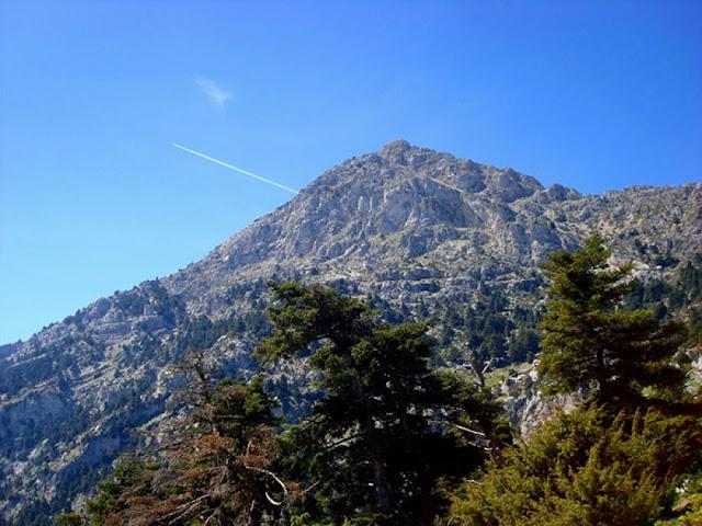 Αρτεμήσιο: Το βουνό της Άρτεμης με τα έλατα του θανάτου