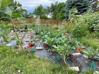 Vegetable Rows