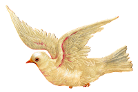 antique white dove illustration digital clipart peace download