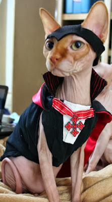 Sphynx cat dressed like a Vampire