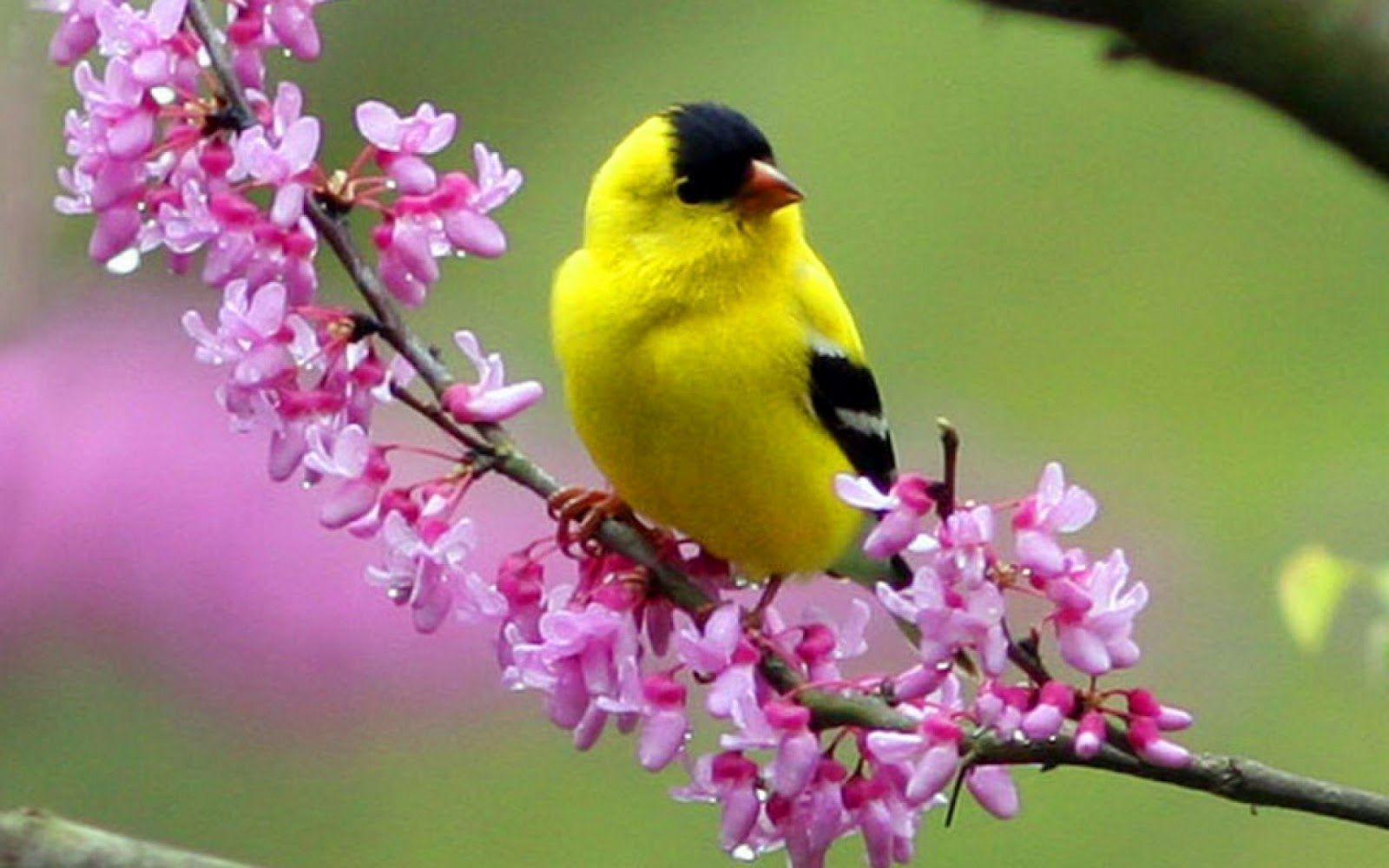 Colorful Little Bird HD Wallpapers