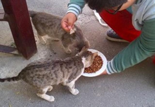 Tahukah Anda? Jika Anda Didekati Kucing Itu Ada 3 Pertanda Dari Allah