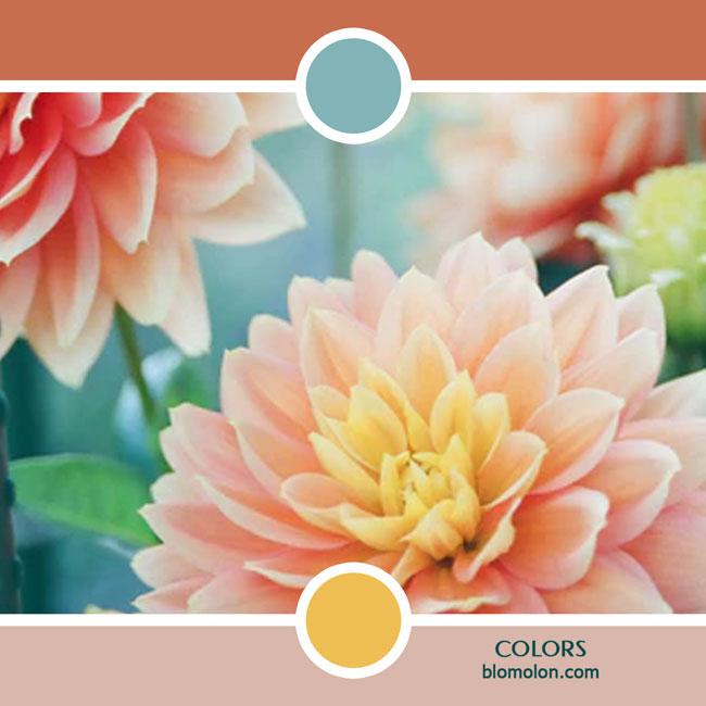 variedad_en_color_color_51
