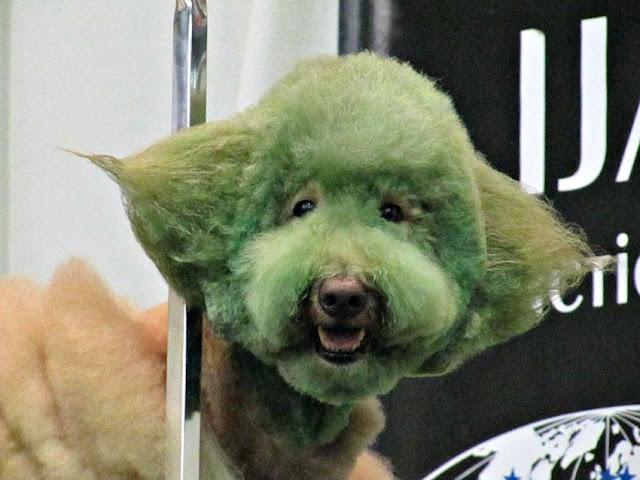 Fotos de perros verdes